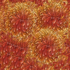 Orange mums Texture