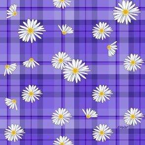 Purple Daisy Craze