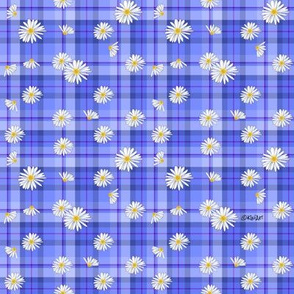 Daisy Plaid Blues (SMALL)