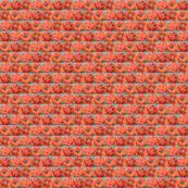 OrangePoppySquare