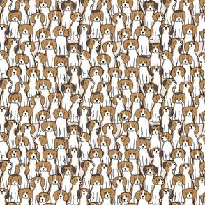 101 beagles