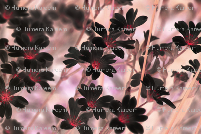 Flowers-642486_preview