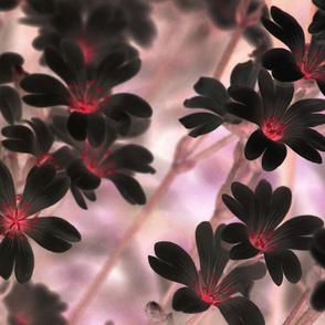 flowers-642486