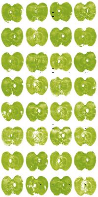 tiny apples - green on white