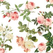 Rrempress_josephine_s_rose_garden_final_shop_thumb