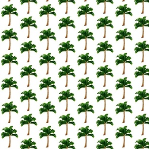 Medium Palm Trees