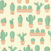Potted Baby Cactus