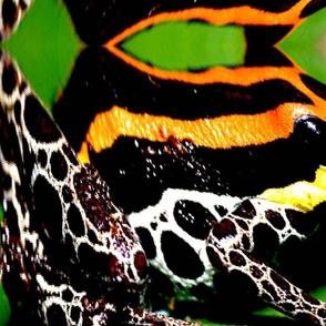 Frog skin 1