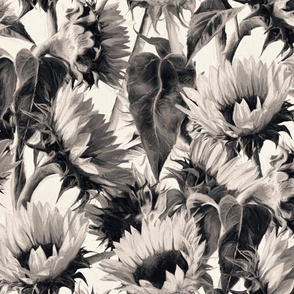 Soft Sepia Sunflowers