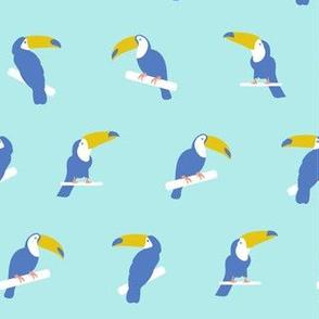 Toucan / blue pastel