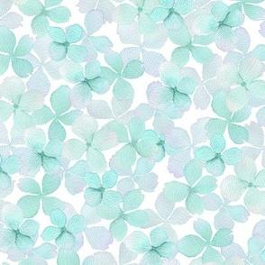 Mint hydrangea