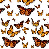 Rrrrmonarchs_shop_thumb