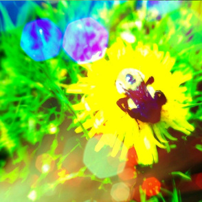 vibrantbees
