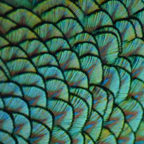 Peacock Panel 2