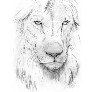 Lion Portrait, Black and White