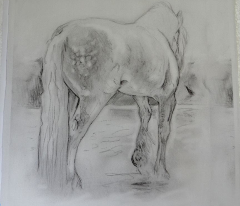 Gypsy Horse, Black and White