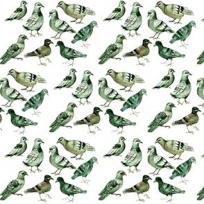 pigeons_-_dense2