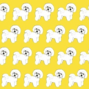 Bichon Frise dog // Sunshine Yellow