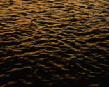 Rrrrorangewaterbark2_thumb