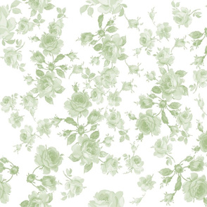 Saint Colette June Roses faded Basil