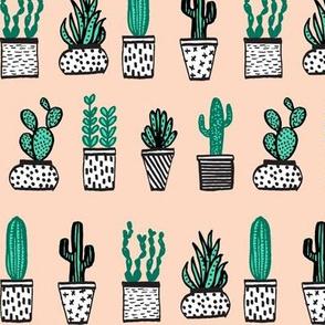 potted plants // cactus plants succulents succulent cacti