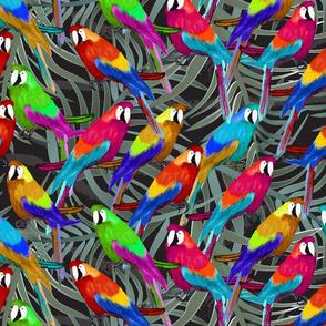 parrots in bush