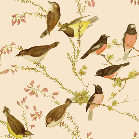 Birds of Australia ~ Robins and Gerygones ~ Alabaster fabric by peacoquettedesigns on Spoonflower - custom fabric