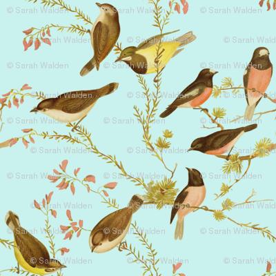 Birds of Australia ~ Robins and Gerygones ~ Tuilleries