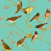 Birds of Australia ~ Robins and Gerygones ~ William