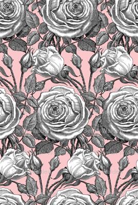 Perle des Jardins ~ Black and White ~ Dauphine