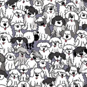 Jumbo Sheepdogs On Watch