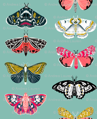 Moths // butterflies moths lepidoptery insects wings print