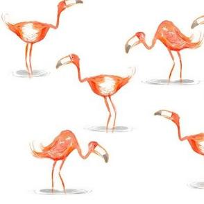 Hi ho, Flamingo
