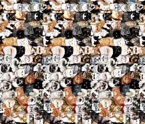 #Catminaproject Gift Wrap fabric by jimiyo on Spoonflower - custom fabric