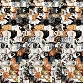 Rtiled-catmina_shop_thumb