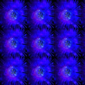 Ice Plant Cosmos IV