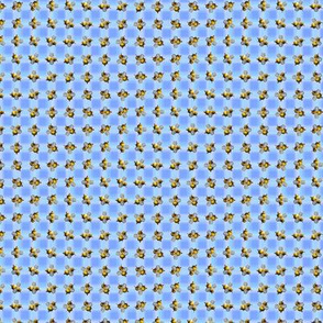 Optical Bees