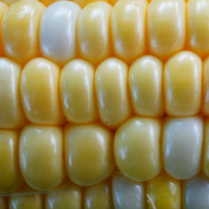 Corn Up Close