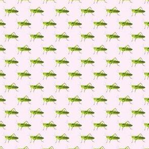 Preppy Grasshopper Pink