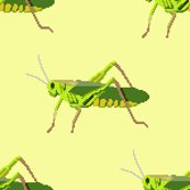 Rgrasshopper_yellow_shop_thumb