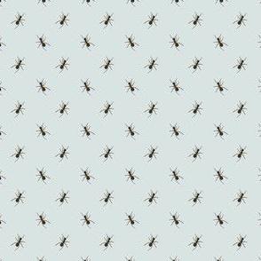 Preppy Ant Cement