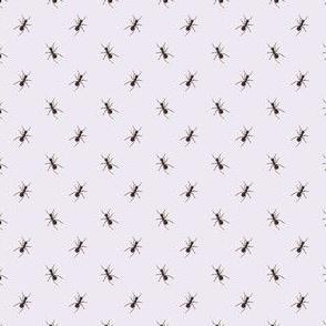 Preppy Ant Lilac