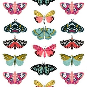 moths and butterflies cute girly pastel insect butterfly spring garden