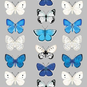 butterflies // grey and blue butterfly insect moth print