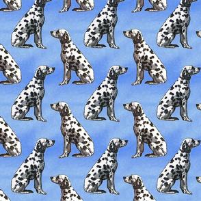 Sitting Dalmatians - blue