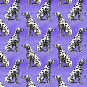 Sitting Dalmatians - purple