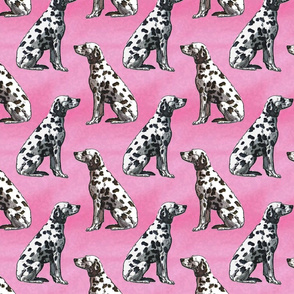 Sitting Dalmatians - pink