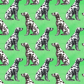 Sitting Dalmatians - green