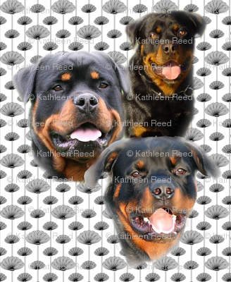 rottweilers_and_thistles