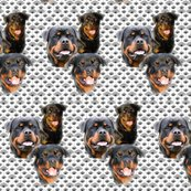 Rrottweilers_and_thistles_shop_thumb